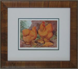 Antique Print Buff Cochins Chickens Mobile custom picture framing Melbourne