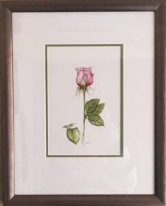 Rose Watercolour mobile picture framing melbourne